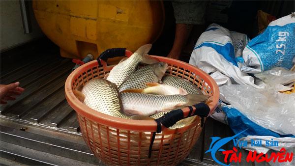 Cá chép giòn miền Tây